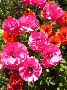 april flowers 3