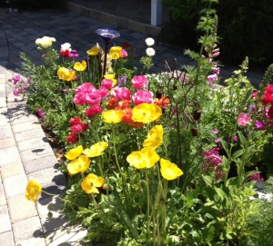 april flowers 4