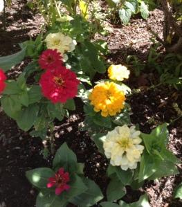 flower aug 5 no. 1