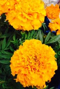 Flor de Muerto (Marigolds)