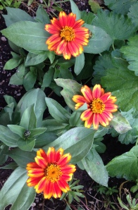 june 5 flowers 4