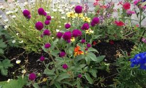 june 5 flowers 5