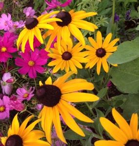june 5 flowers 6