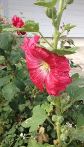june 5 flowers 8
