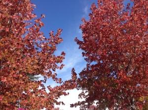 fall 7