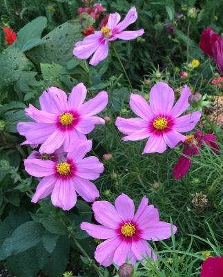 flowers june 10 4