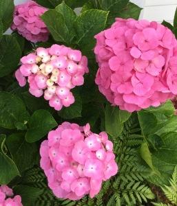 flowers june 10 6