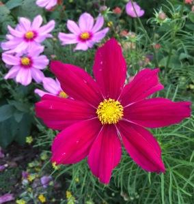 flowers june 10 7