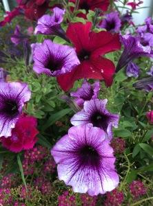 flowers june 10 9